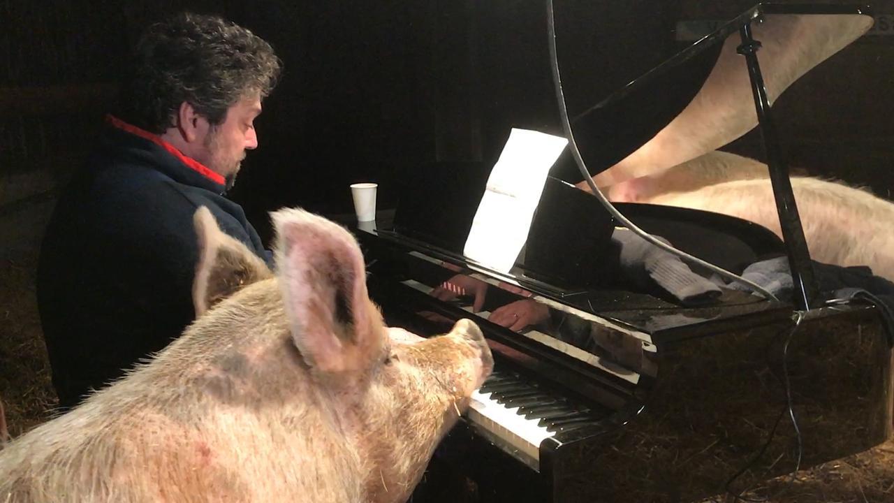 Varken 'speelt mee' tijdens concert van Mike Boddé in schuur