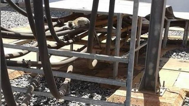 Aapje zorgt voor stroomuitval in heel Kenia