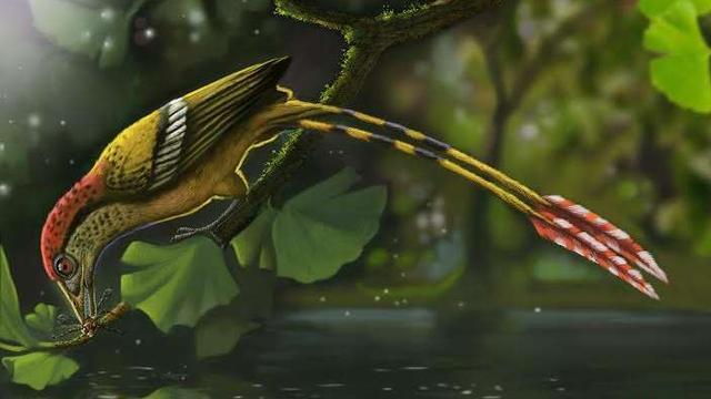 Oudste vogelresten uit supercontinent Gondwana ontdekt
