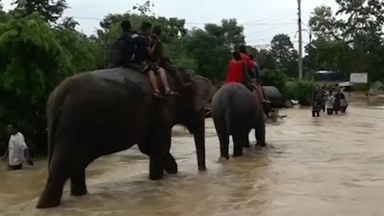 Olifanten helpen bij evacuatie toeristen na overstromingen in Nepal