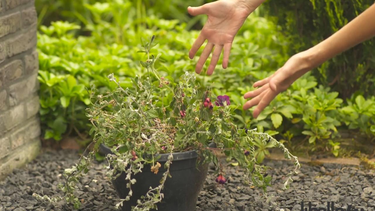 Zo houd je je planten in leven tijdens je vakantie