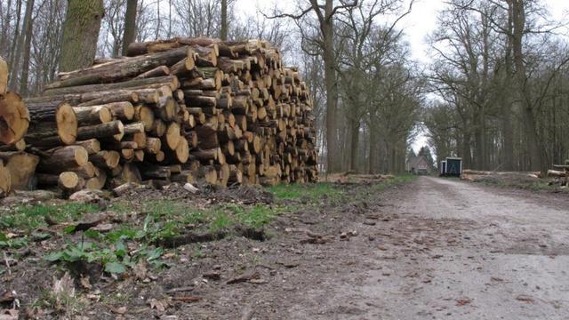 Staatsbosbeheer start eind augustus met bomenkap Liesbos
