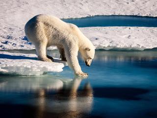 Warmtestijging vooral in Antarctische gebied gemeten, record voor derde opeenvolgende jaar gebroken