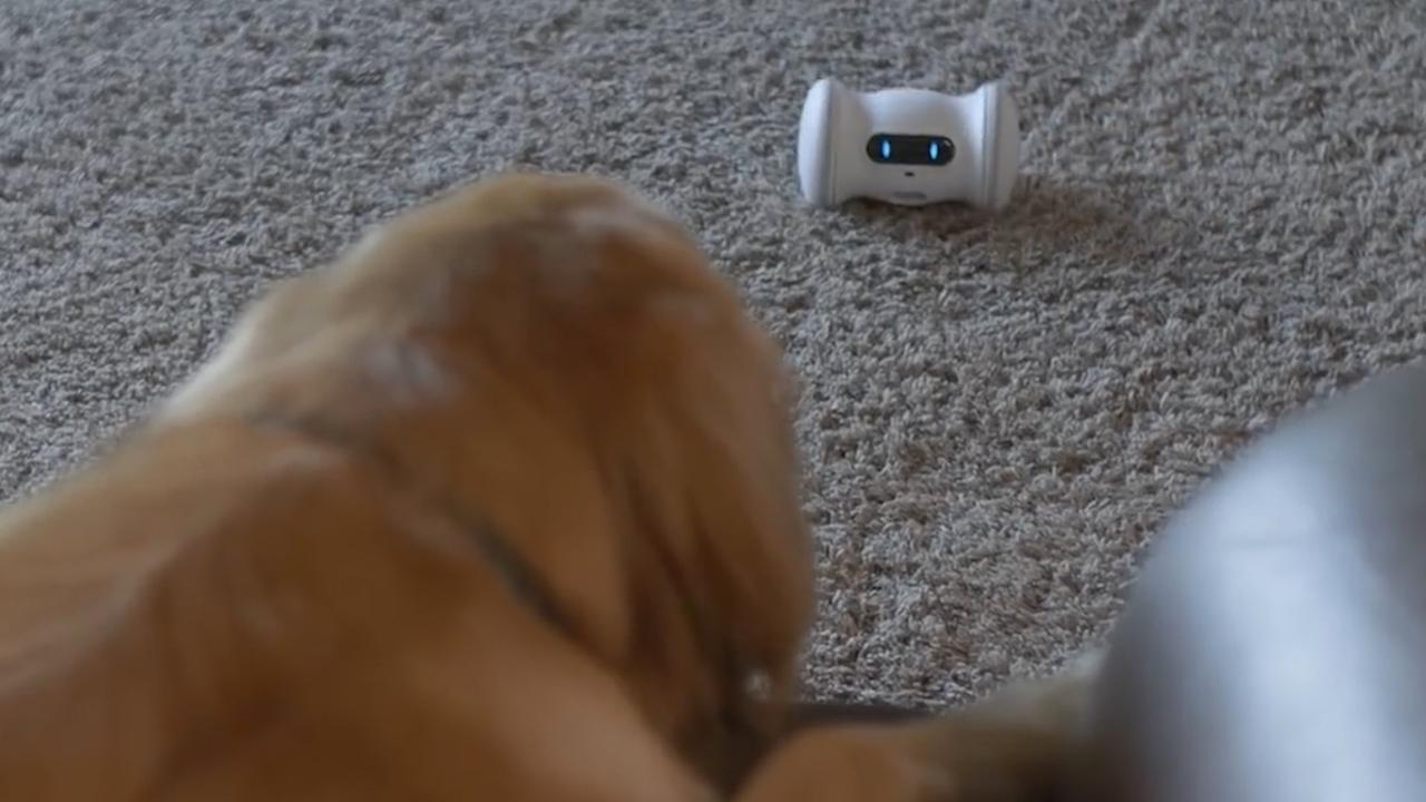 Robot houdt huisdier in beweging als eigenaar weg is