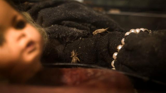 Partij voor de Dieren hekelt gebruik van krekels in spookhuis Utrecht