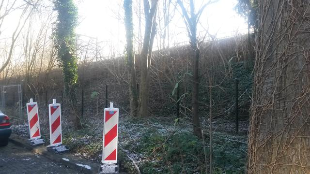 Bomenkap Galjoenstraat uitgesteld na actie Partij voor de Dieren