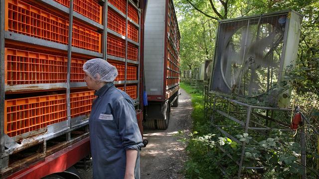 Eerder boetes voor overtredingen bij transport en doden dieren
