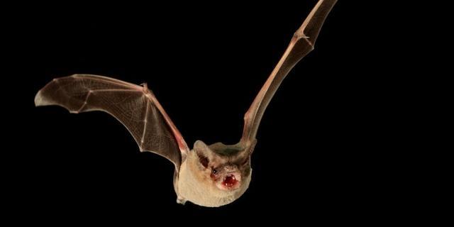 Felle lampen bij Julianavijver gedoofd vanwege winterslaap vleermuizen