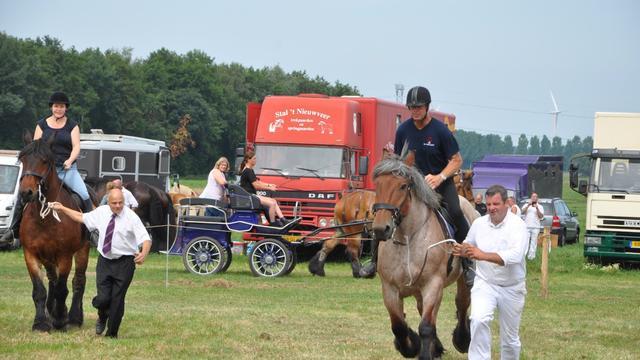 Paardenliefhebbers kunnen hun hart ophalen in Etten-Leur
