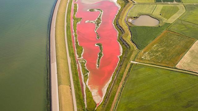 Texelse waterplas knalroze door algen en droogte