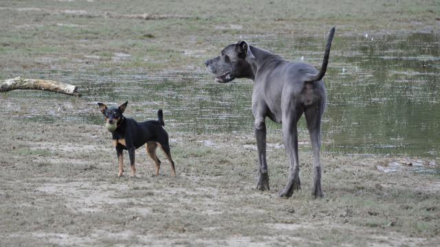 'Eerste honden ontstonden in Azië'