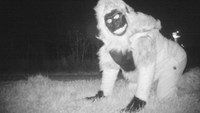 Camera voor poema's in VS registreert alleen grappenmakers in dierenpak