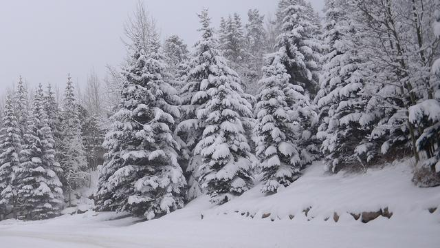 60 centimeter sneeuw op eerste zomerdag in Amerikaanse staat Colorado