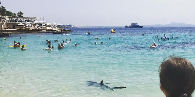 Haai die bij Mallorca dicht bij kinderen zwom overgebracht naar aquarium