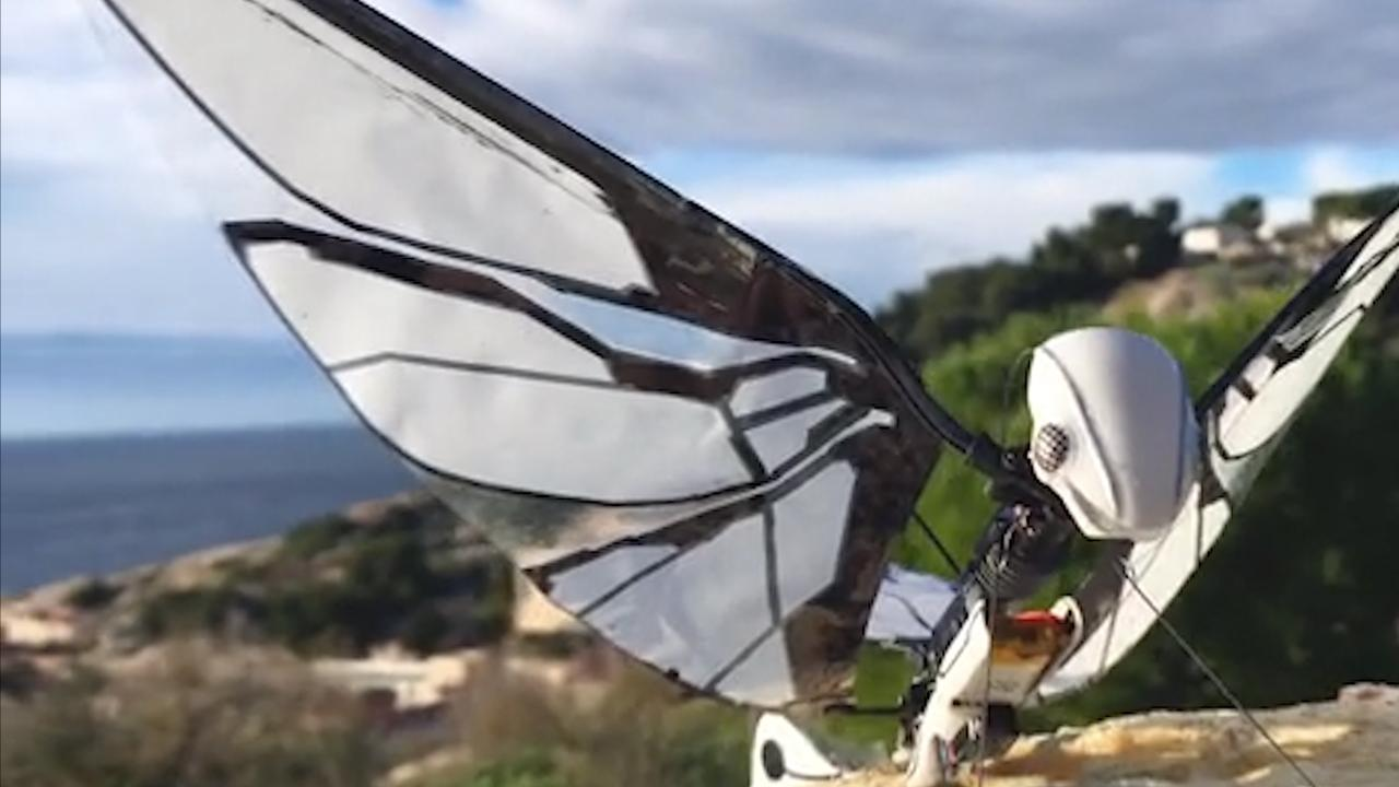 Wendbare 'robotmot' vliegt zonder problemen tussen bomen door