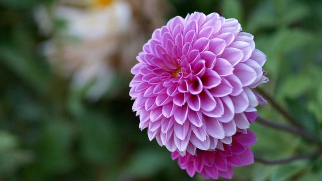 Tien planten die ook in het najaar bloeien, en je tuin opfleuren