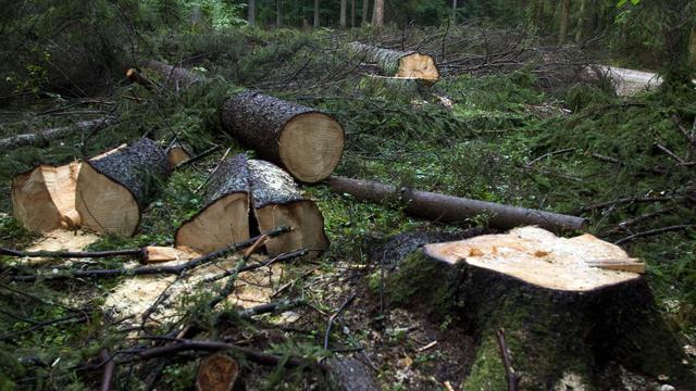Europees hof bepaalt dat Polen kappen van oerbos moet beëindigen