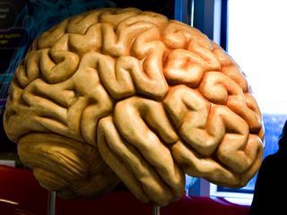 Bestanddeel van ayahuasca getest op 'mini-hersenen'