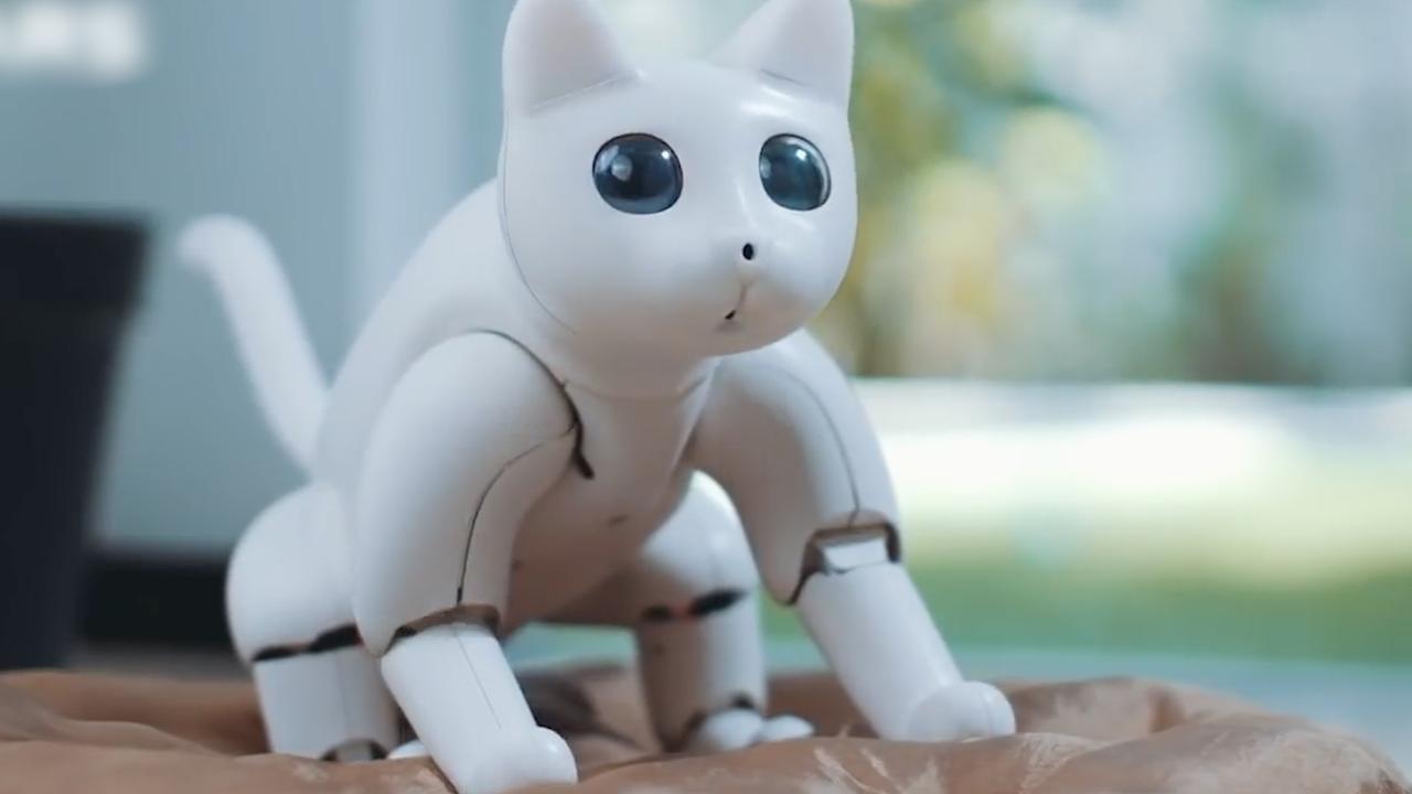 Autonome robotkat 'kan persoonlijkheid ontwikkelen'