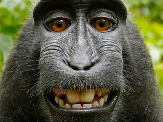 Makaak maakte selfie met camera die fotograaf onbewaakt achterliet