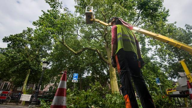 Gemeente druk met redden van oude boom aan de Oudegracht