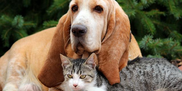 Steeds meer huisdieren in Nederland hebben ziektekostenverzekering