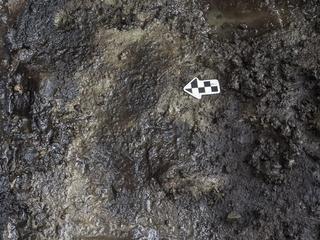 Afdrukken van 11.000 tot 14.000 jaar oud gevonden 60 centimeter onder grond