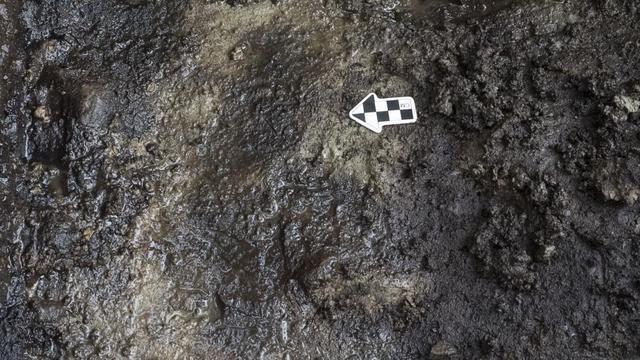 Prehistorische voetafdrukken ontdekt op Canadees strand