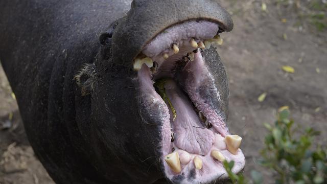 Bezoekers Colombiaanse dierentuin mogen dieren ijslolly's voeren