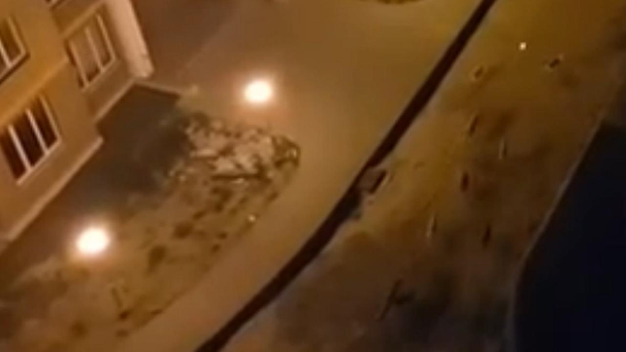 Kijk wat deze Russen doen met straathonden