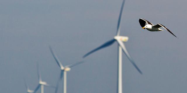 Raad van State geeft groen licht voor windmolens langs A16