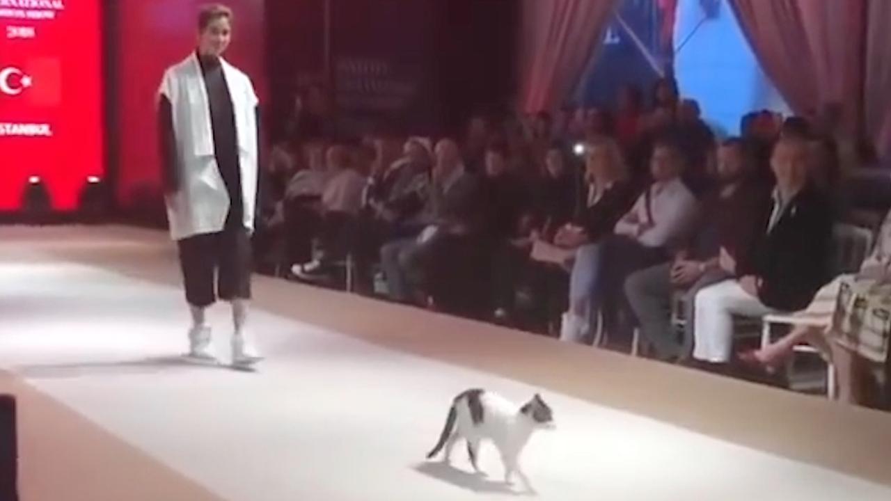 Zwerfkat steelt de show op catwalk in Istanboel