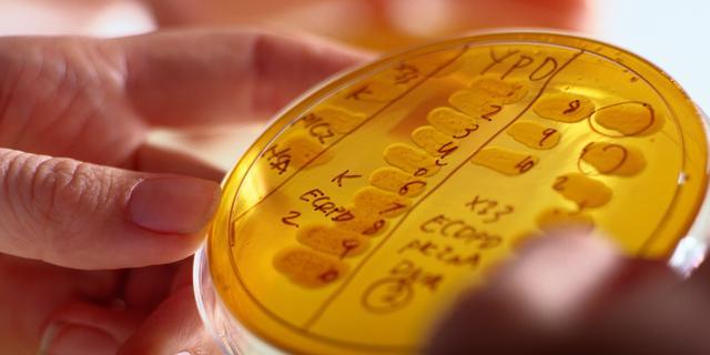 Eerste patiënt die behandeld werd met bacteriofagen overleden