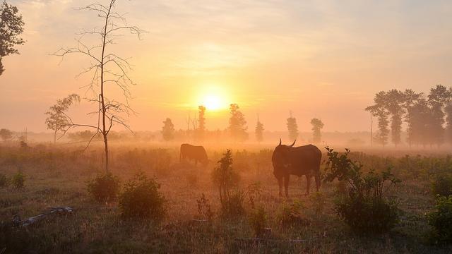 KNMI geeft opnieuw code geel af wegens dichte mist