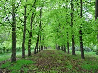 Na de aanleg volgen er nog vier tiny forests in de kernen van de gemeente.
