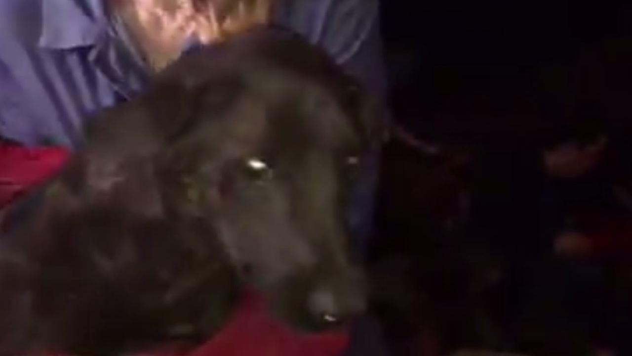 Duizend honden gered tijdens hondenvleesfestival