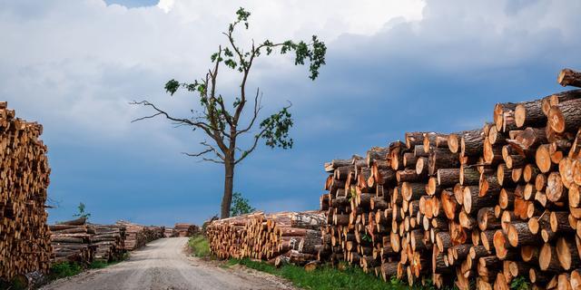 Kunnen we onze CO2-uitstoot weer uit de lucht halen met 'negatieve emissies'?