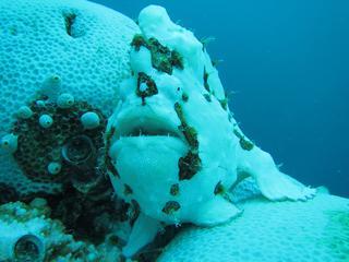 Verbleken koraal is gevolg opwarming aarde