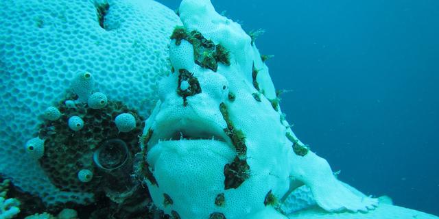 'Huidskleur van voelsprietvis verandert door verbleekt koraal'