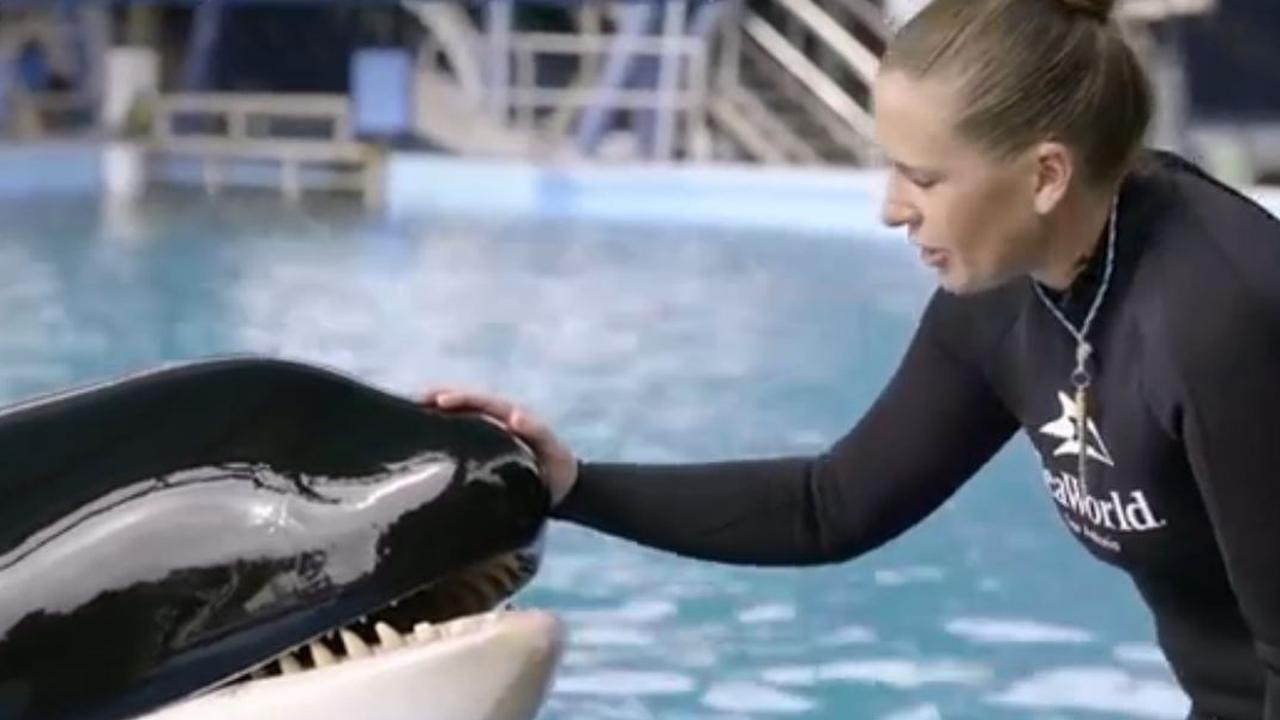 Zwangerschap orka Takara Sea World bijzonder voor verzorgster