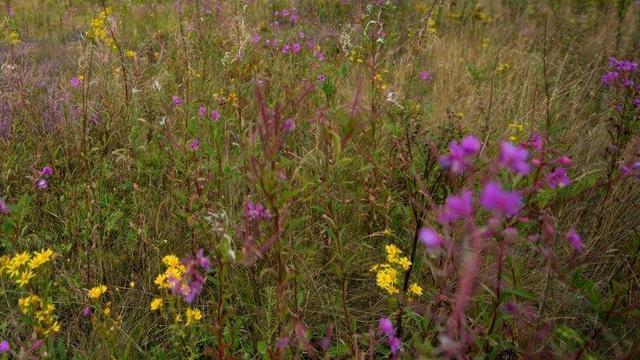 Miljoenen voor meer biodiversiteit bij bedrijventerreinen