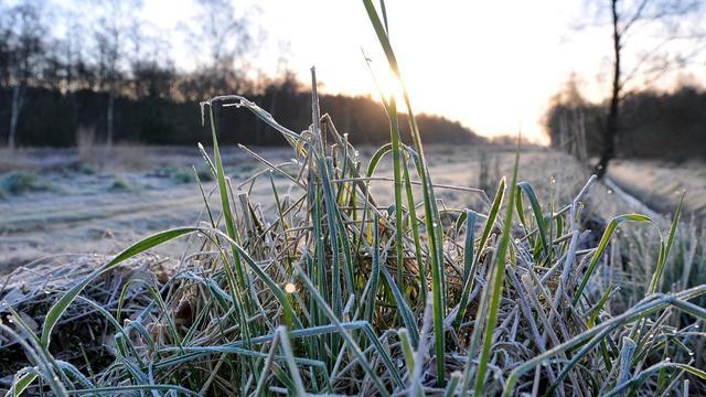 Weerbericht: Lokaal lichte vorst, na weekend weer hogere temperaturen