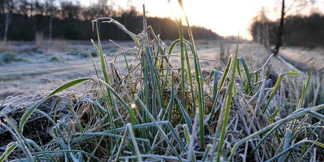 Weerbericht: Dag begint koud, in de middag kans op buien