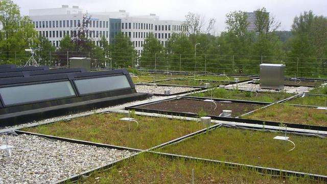 50.000 euro extra beschikbaar voor groene daken in Utrecht