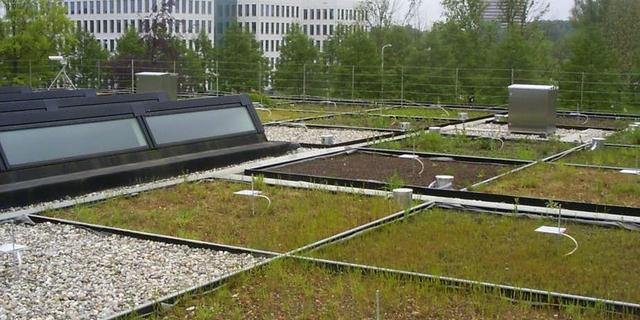 Groen dak helpt beestjes, versterkt zonnepanelen en houdt je huis koel