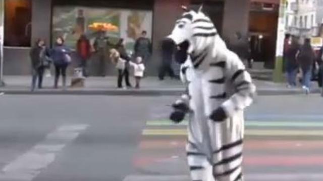 Verkeersregelende zebra's uitgeroepen tot cultureel erfgoed Bolivia