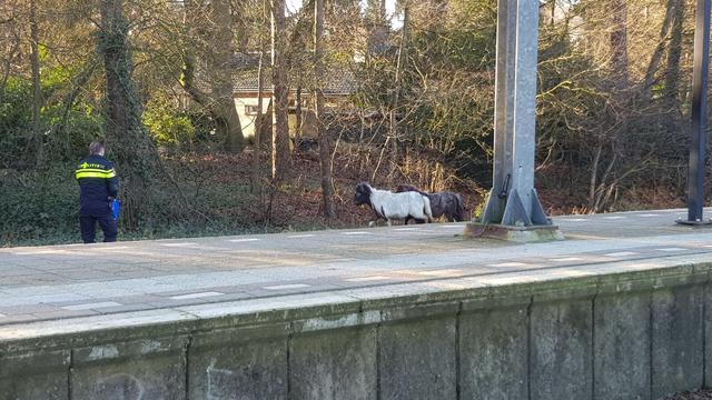 Pony's op het spoor hinderen treinverkeer bij Ommen