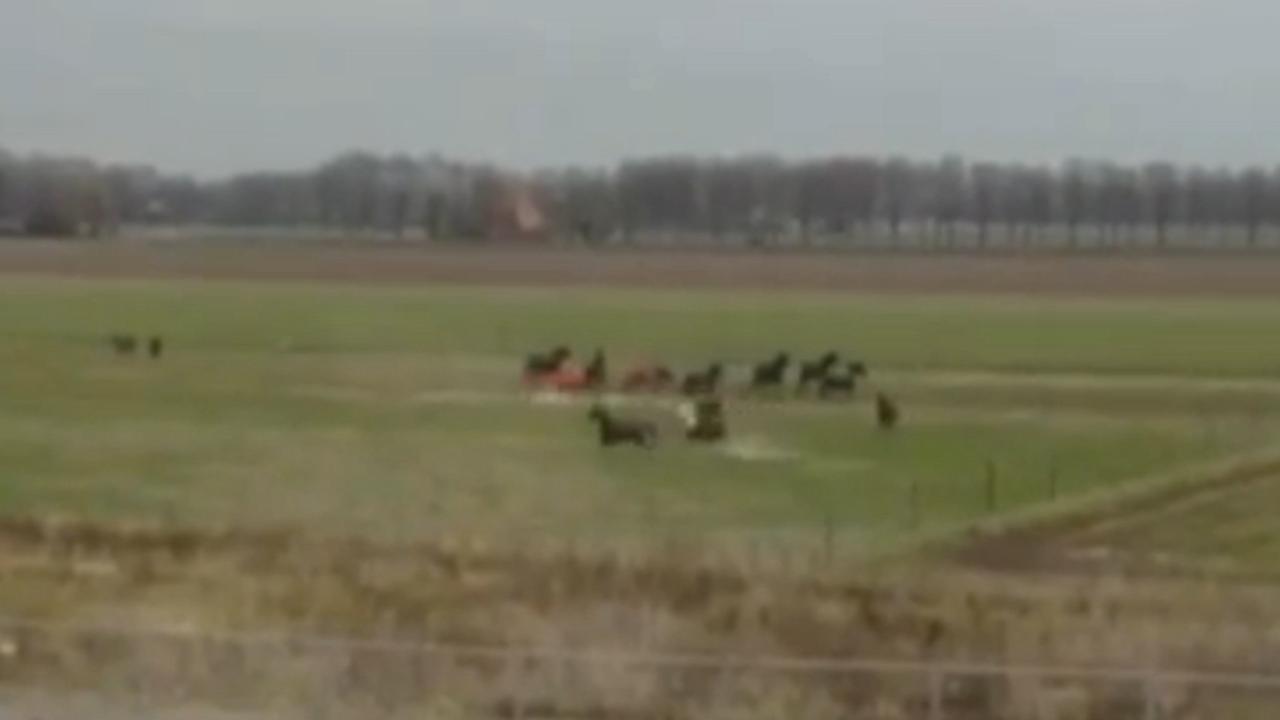 Paarden in veiligheid gebracht na brand in manage Gorinchem