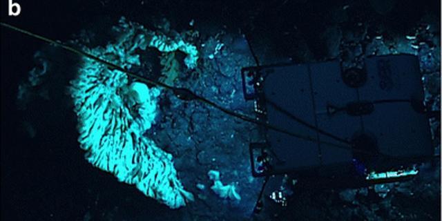 'Grootste sponsdier ter wereld ontdekt voor kust Hawaï'