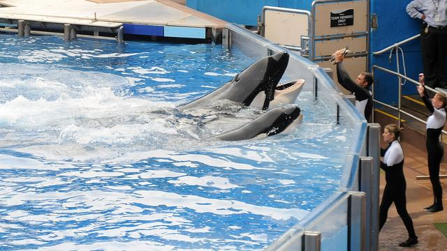 Pretpark Sea World stopt met omstreden orkashows
